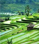 pariwisata Indonesia Malaysia